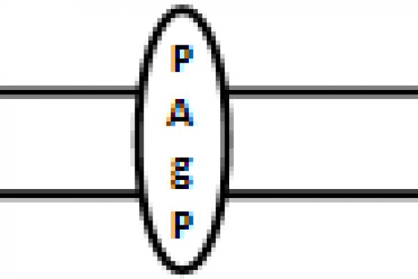 PAgP.png